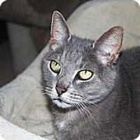 Adopt A Pet :: Oliver - North Branford, CT