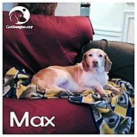 Adopt A Pet :: Max - Novi, MI