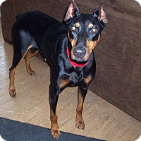 Adopt A Pet :: Sasha--adopted!! - New Richmond, OH