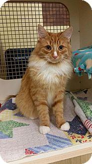 Cat Rescue Livonia Mi