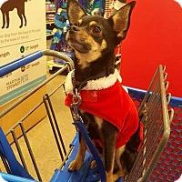 Adopt A Pet :: Jasper - Yuba City, CA