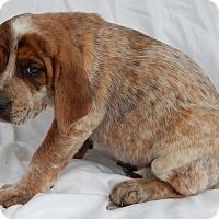 Adopt A Pet :: Dallas (8 lb) - Sussex, NJ