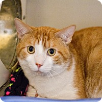 Adopt A Pet :: Bobby - Lincoln, NE
