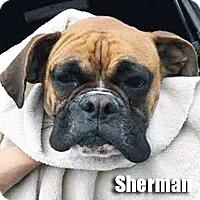 Adopt A Pet :: Sherman - Encino, CA