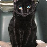 Adopt A Pet :: Helena - Lakewood, CO