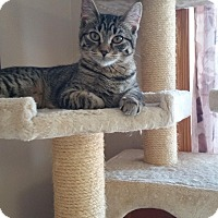 Adopt A Pet :: Rue - Chippewa Falls, WI