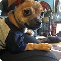 Adopt A Pet :: Machado - Millersville, MD