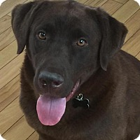Adopt A Pet :: Barnaby (pending) - Coldwater, MI