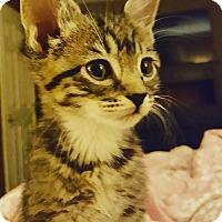 Adopt A Pet :: Sleepy (foster care) - Philadelphia, PA
