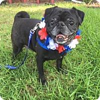 Adopt A Pet :: Ozri - Grapevine, TX