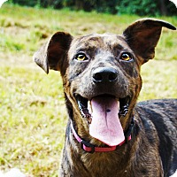 Adopt A Pet :: Marty - Waynesboro, TN