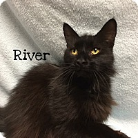 Adopt A Pet :: River - Foothill Ranch, CA