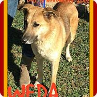 German Shepherd Dog Mix Dog for adoption in Manchester, New Hampshire - WEDA