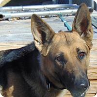 Adopt A Pet :: Farrah - Nashua, NH