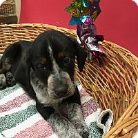 Adopt A Pet :: Rudolph - Decatur, AL