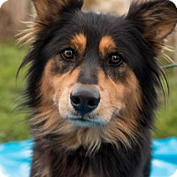 Adopt A Pet :: Darius - Minneapolis, MN