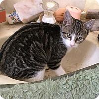 Adopt A Pet :: Lulubelle - Sarasota, FL
