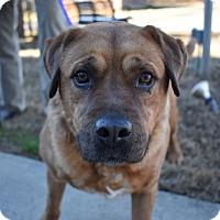 Adopt A Pet :: Benson - Hendersonville, NC