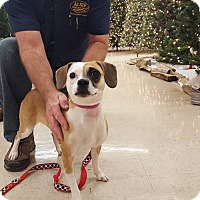 Adopt A Pet :: Zoey - St John, IN