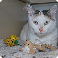 Adopt A Pet :: Boo Boo - New Castle, PA