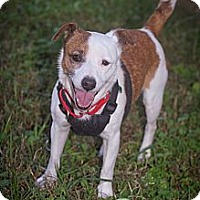 Adopt A Pet :: Hunter - Conyers, GA