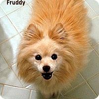 Adopt A Pet :: Fruddy - Irvine, CA