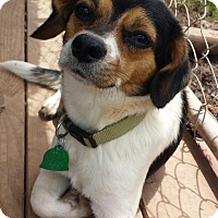 Adopt A Pet :: Rudy - Natchitoches, LA