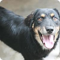 Adopt A Pet :: Marcus - Canoga Park, CA