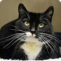 Adopt A Pet :: Octavia - Versailles, KY