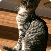 Adopt A Pet :: Archie - Cleveland, OH