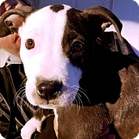 Adopt A Pet :: Hugo - Rancho Cucamonga, CA