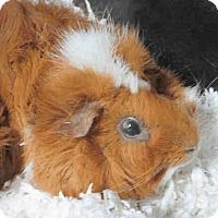 Adopt A Pet :: *Urgent* Raisin - Fullerton, CA