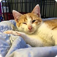 Adopt A Pet :: Mason - Island Park, NY