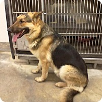Adopt A Pet :: JACK - Upper Sandusky, OH