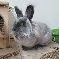 Adopt A Pet :: Jessa - Newport, DE