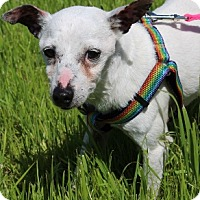 Adopt A Pet :: Wilma - Grants Pass, OR
