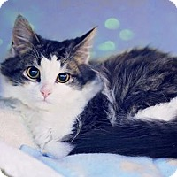 Adopt A Pet :: Gucci - Markham, ON