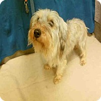 Adopt A Pet :: *EMERSON - Upper Marlboro, MD