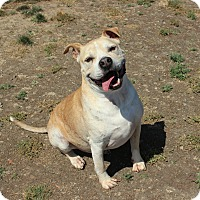 Adopt A Pet :: Duke - Yuba City, CA