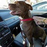 Adopt A Pet :: Rocky - Modesto, CA