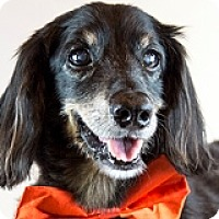 Adopt A Pet :: Simon Stubbs - Houston, TX