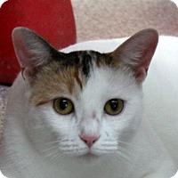 Adopt A Pet :: Sundae - Sarasota, FL