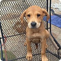 Adopt A Pet :: Jenner - Trenton, NJ