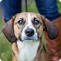 Adopt A Pet :: Joyce (Has Application) - Washington, DC