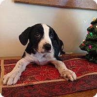 Adopt A Pet :: Phiona - Manchester, NH