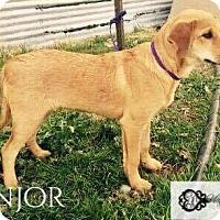 Adopt A Pet :: Ranjor - DeForest, WI