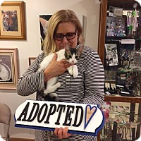 Adopt A Pet :: Tuffy - Powell, OH