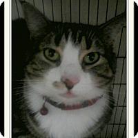 Adopt A Pet :: Marilyn - Trevose, PA