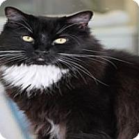 Adopt A Pet :: Sven - El Cajon, CA