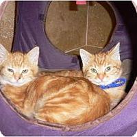 Adopt A Pet :: Da Boyz - Brea, CA